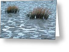 Cord Grass At Low Tide In San Francisco Bay Greeting Card