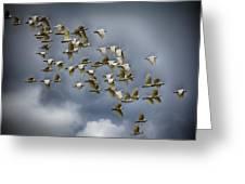 Corella Flock Greeting Card