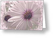 Coreopsis - Dreaming In Pink Greeting Card