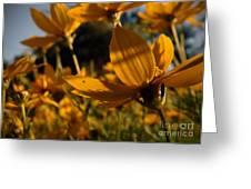Coreopsis Summer 2010 Greeting Card