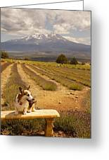 Corgi And Mt Shasta Greeting Card