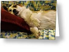 Corgi Asleep On The Pillow Greeting Card