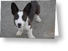 Corgi Puppy Greeting Card