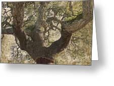 Cork Oak Tree Greeting Card