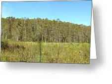 Corkscrew Swamp 1 Greeting Card