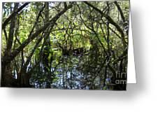 Corkscrew Swamp 3 Greeting Card