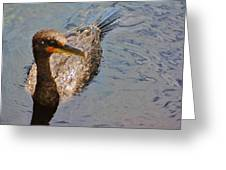 Cormorant After A Swim Greeting Card