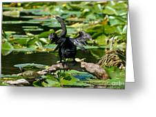 Cormorant And Turtle Greeting Card