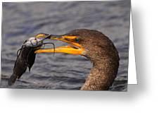 Cormorant Catching Catfish Greeting Card