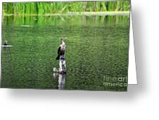 Cormorant Chilling Greeting Card
