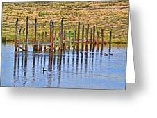 Cormorant Convention Greeting Card