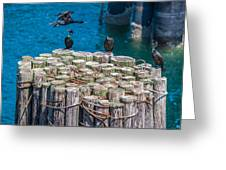 Cormorant Landing Greeting Card