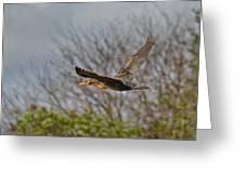 Cormorant On Wings Greeting Card