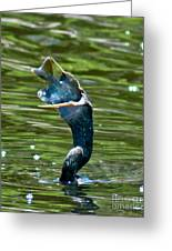 Cormorant With Catch Greeting Card