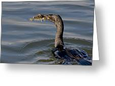 Cormorant With Fish Greeting Card