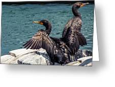 Cormorants Greeting Card