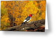 Corn Fed Woodpecker Greeting Card