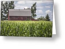 Corn Field And Barn Greeting Card