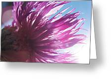 Corn Flower And Light Greeting Card