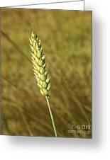 Corn Head Greeting Card