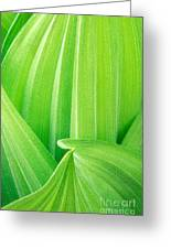 Corn Lily Leaf Detail Yosemite Np California Greeting Card