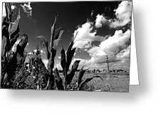Corn Maze 01 Bw Greeting Card