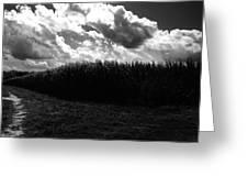 Corn Maze 03bw Greeting Card