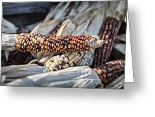 Corn Of Many Colors Greeting Card by Caitlyn  Grasso