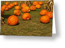 Corn Plants With Pumpkins In A Field Greeting Card