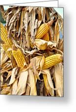 Corn Shock - Sign Of Autumn Greeting Card