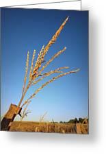 Corn Tassel Greeting Card