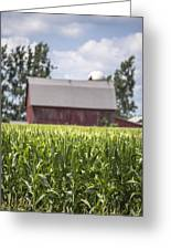 Corn With A Red Barn  Greeting Card