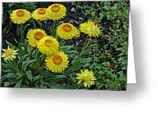 Cornell In June Greeting Card