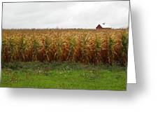 Cornfield And Farmhouse Greeting Card