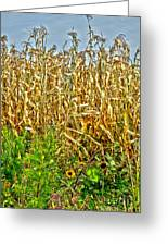 Cornfield Greeting Card by Baywest Imaging
