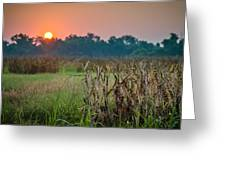 Cornfield Morning Greeting Card