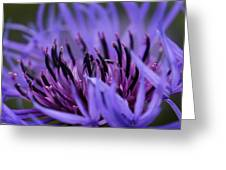 Cornflower Greeting Card