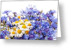 Cornflower And Chamomile Bunch Blooms  Greeting Card