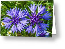 Cornflowers Growing In A Field Greeting Card