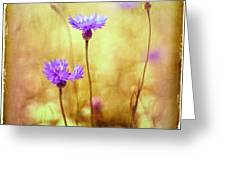 Cornflowers On The Meadow Greeting Card