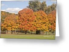 Corning Fall Foliage 1 Greeting Card