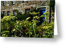 Cornish Cow Parsley  Greeting Card