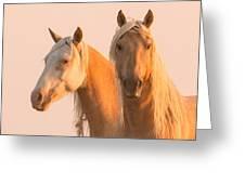 Corona And Cheyenne At Dawn Greeting Card