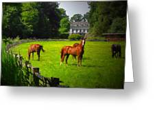 Corralled Horses - Featured In And Lets All Participate And Abc Groups Greeting Card