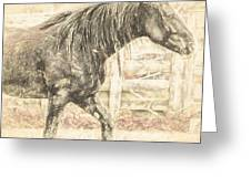 Corralled Stallion Drawn Greeting Card