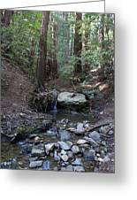 Corte Madera Creek On Mt. Tam In 2008 Greeting Card