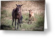 Cortez Colorado Mustangs Greeting Card