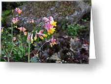 Corydalis In Garden Greeting Card