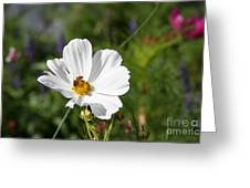 Cosmea And Bee Greeting Card