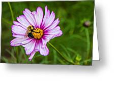 Cosmos 2 Greeting Card